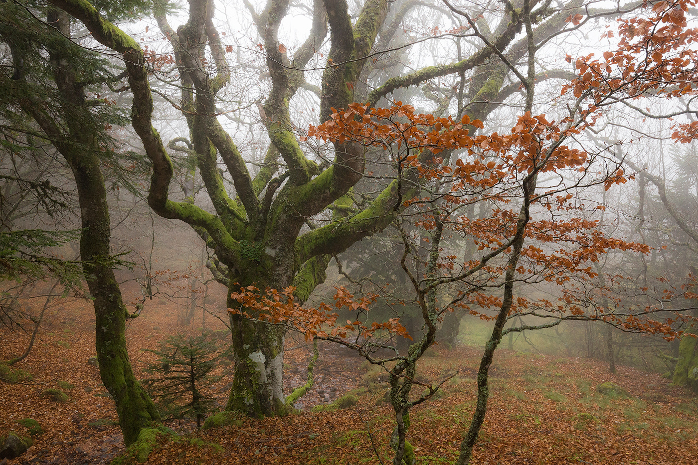 auvergne-puy-de-dome-nicolas-rottiers-photographe-normandie